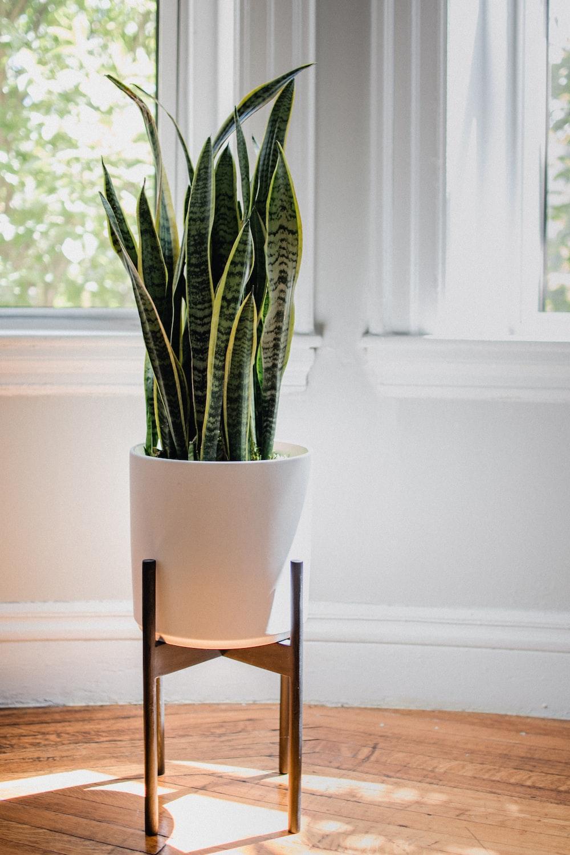 green snake plant on white ceramic pot
