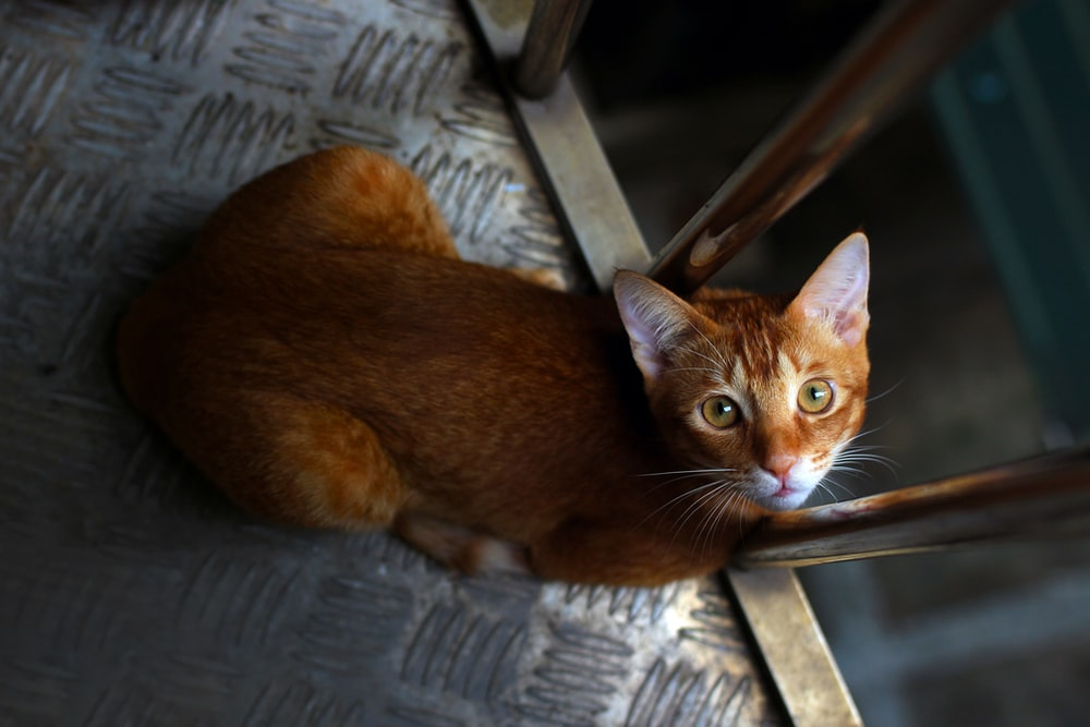 brown cat on gray wooden chair