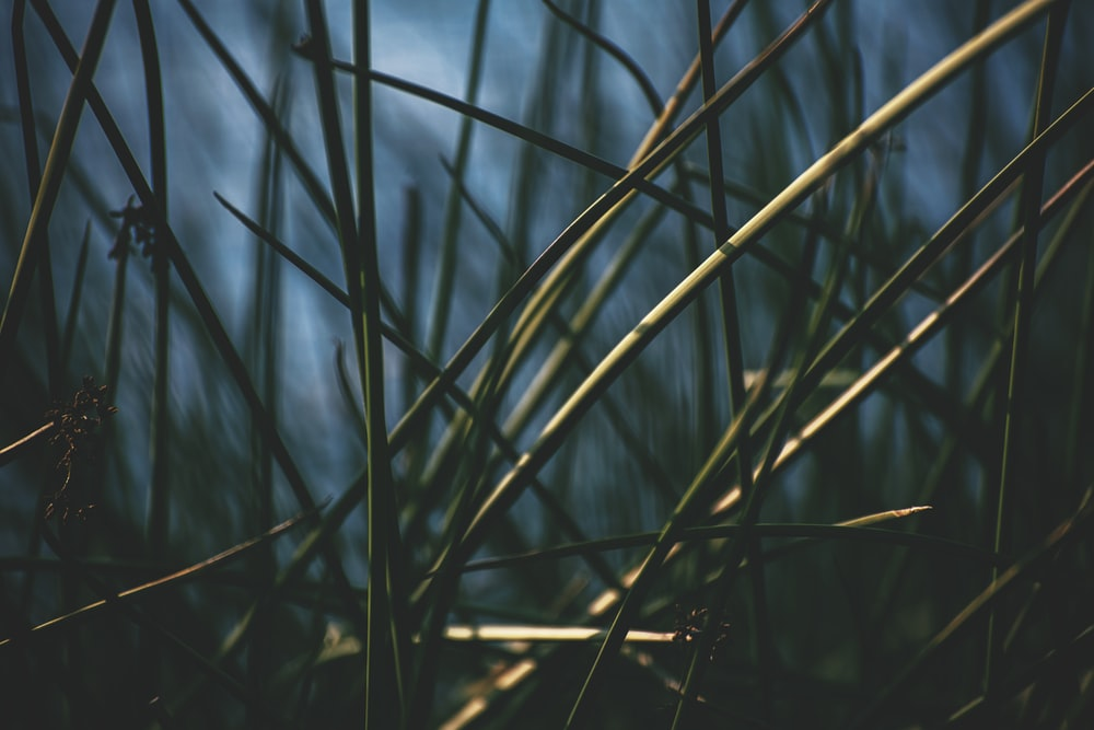 green grass in close up photography