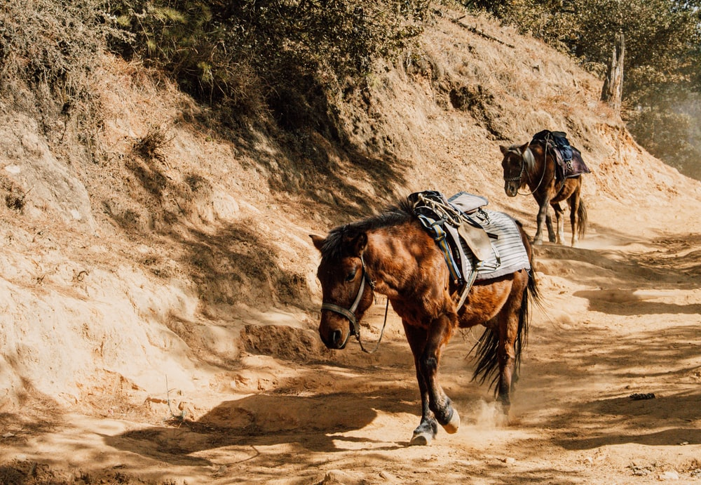 brown horse on brown sand during daytime