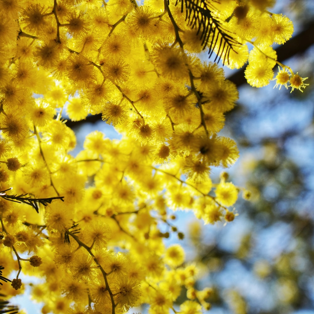 yellow leaf tree during daytime