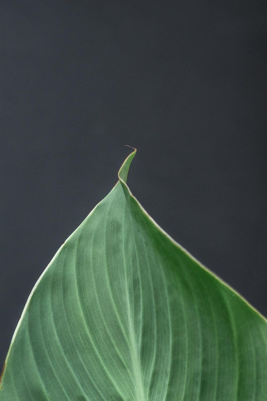 purple leaf with black background