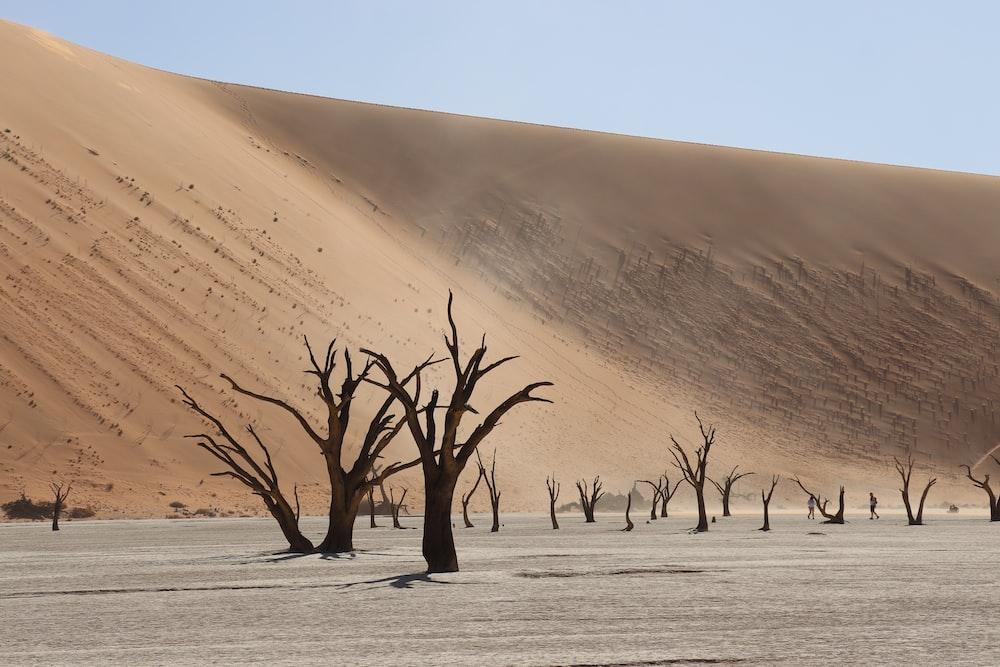 leafless tree on desert during daytime