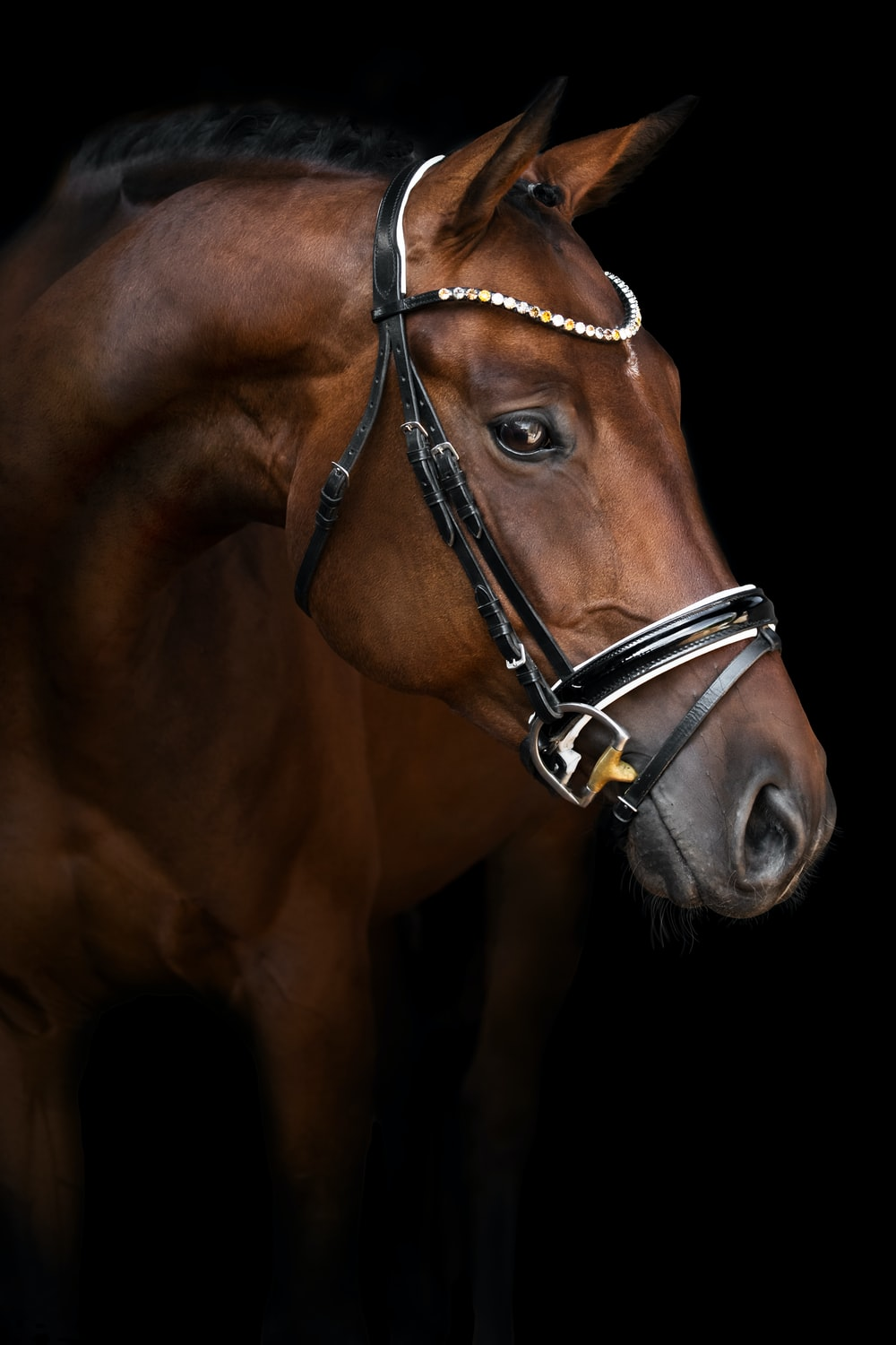 brown horse with black leather strap