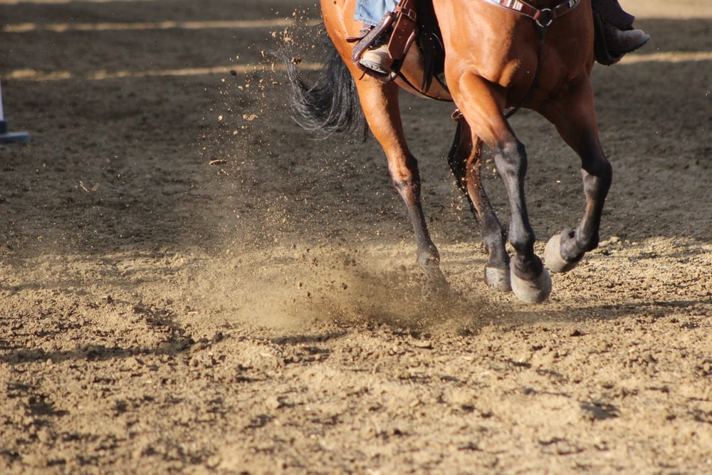 brown horse running on brown soil