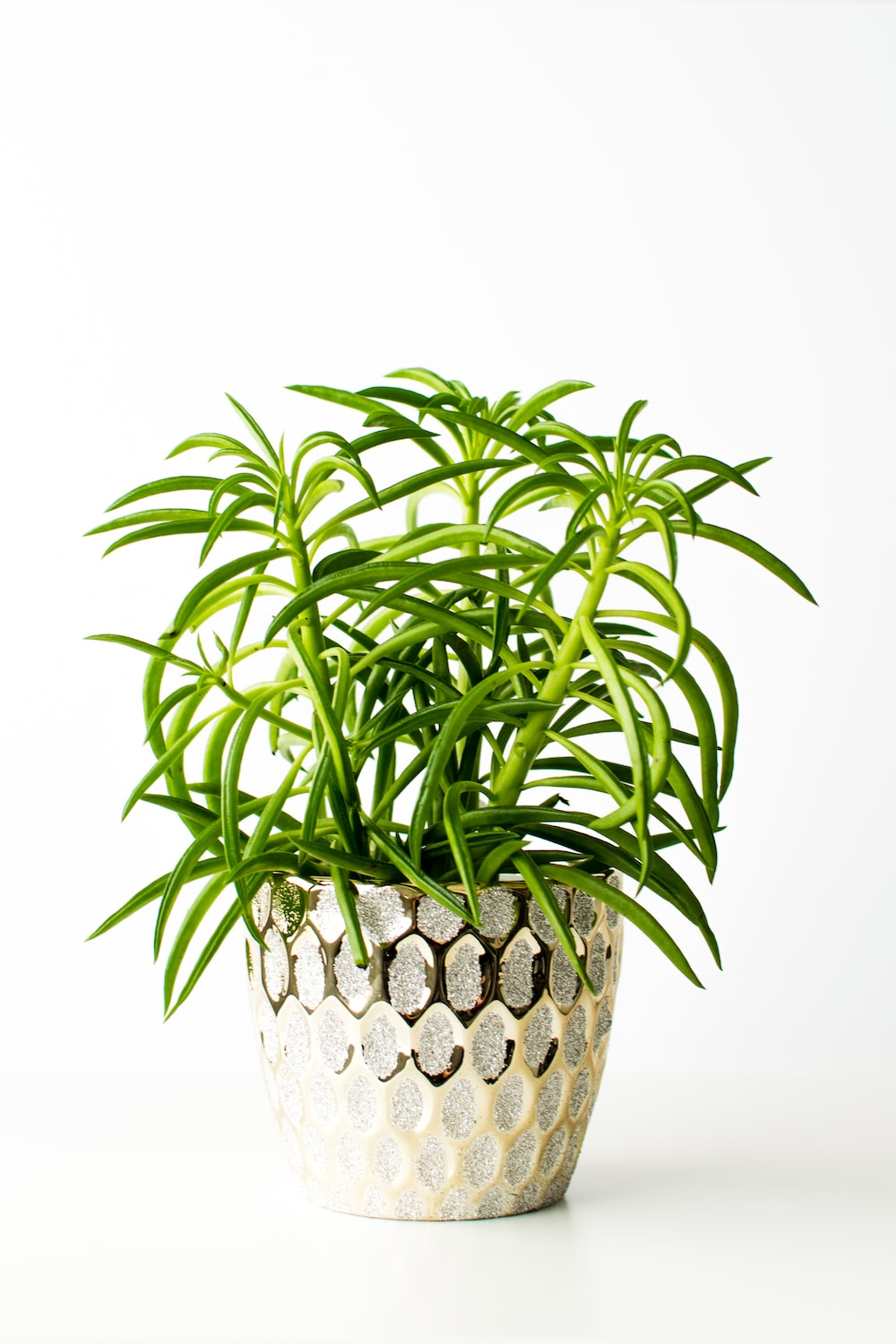 green plant on brown woven basket