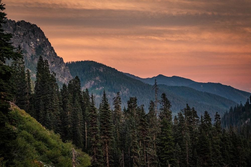 green pine trees on mountain during daytime