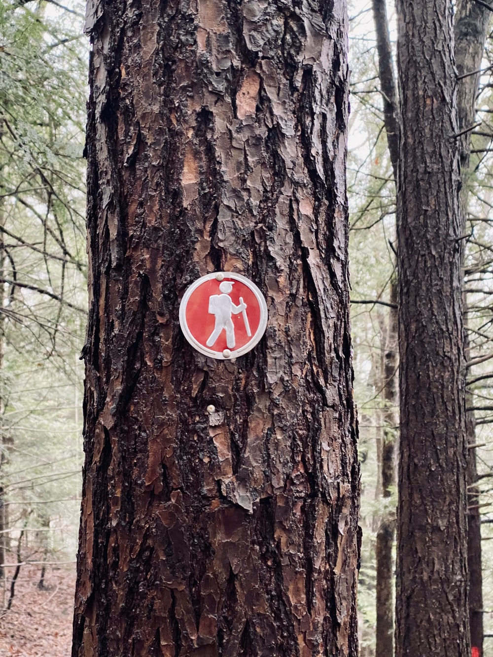 red and white stop sign on brown tree