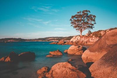 brown bare tree on brown rock formation near body of water during daytime