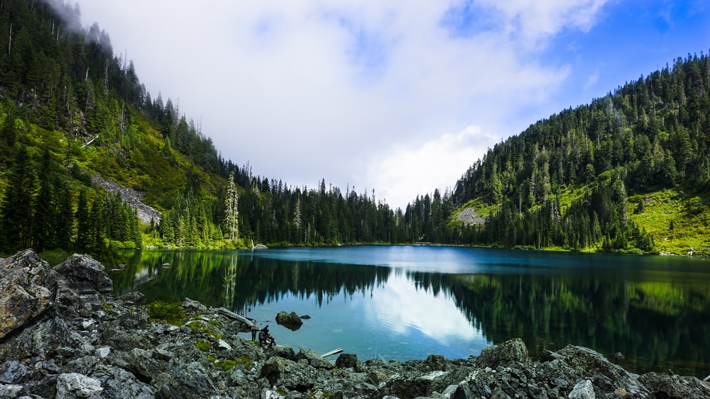 green trees beside lake under white clouds during daytime