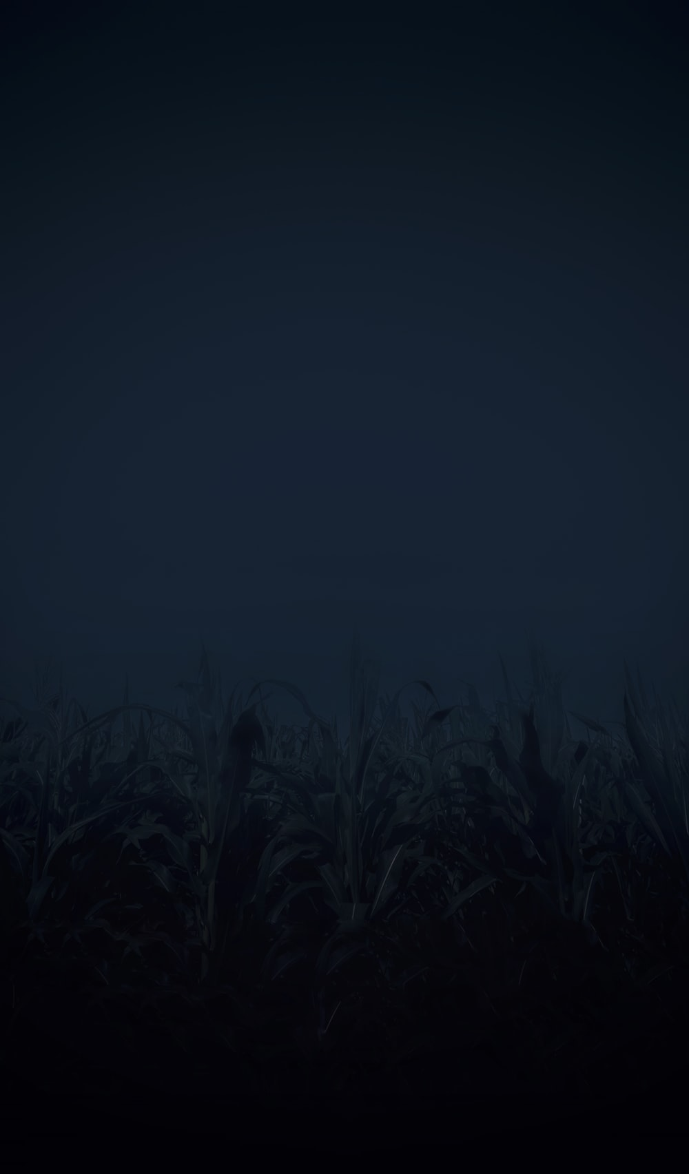 green grass field during night time