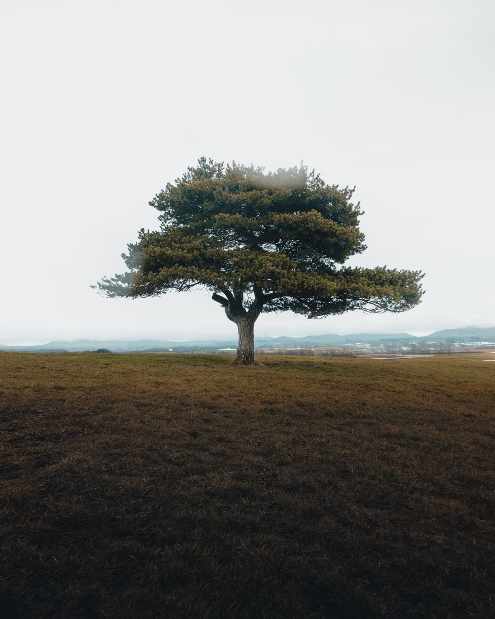 green tree on brown grass field during daytime