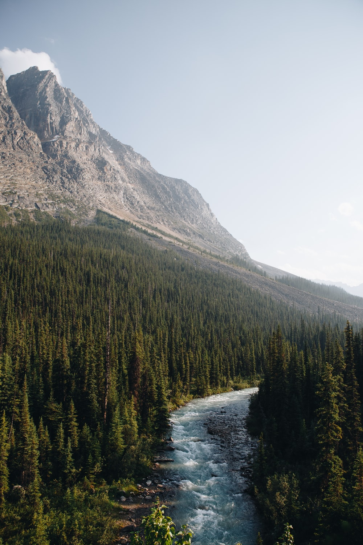 green pine trees near brown mountain during daytime