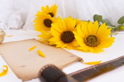 yellow sunflower on white table kosovo zoom background