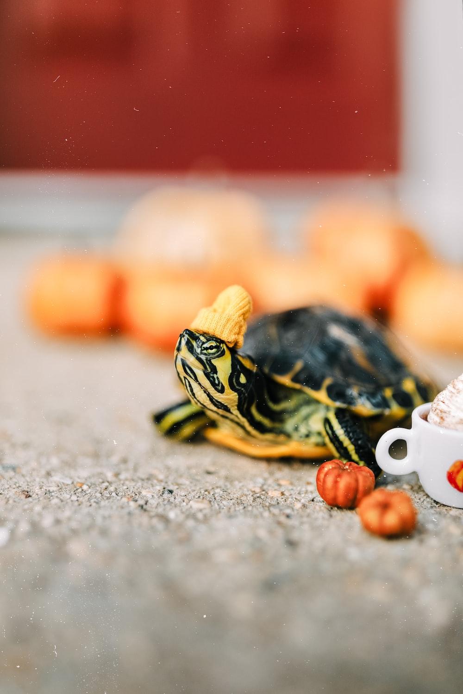 black and yellow turtle figurine