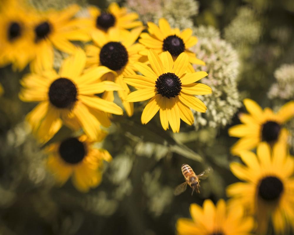 honeybee on yellow sunflower during daytime