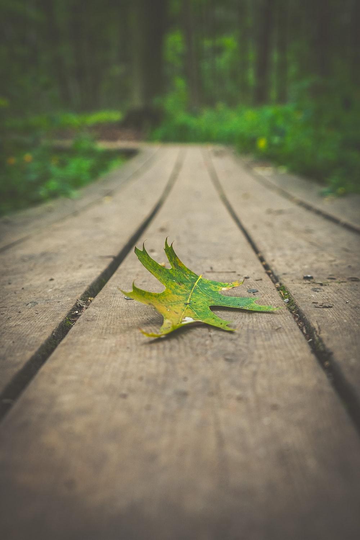green maple leaf on gray concrete floor