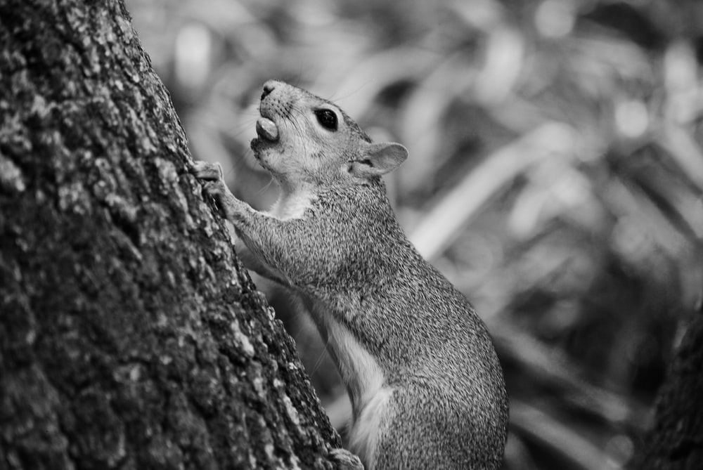 gray squirrel on brown tree branch