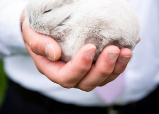 person holding white rabbit during daytime