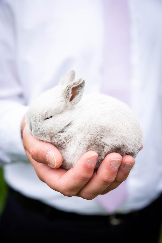 person holding white rabbit during daytime