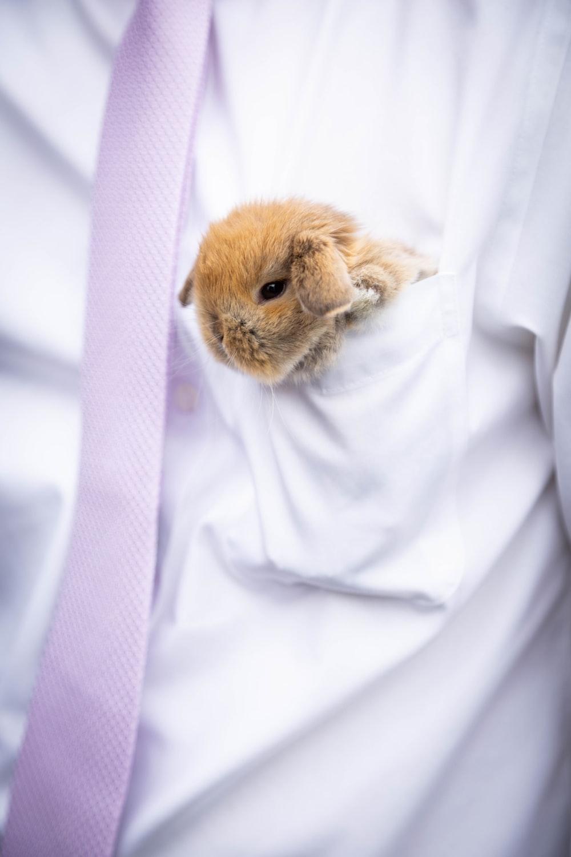 brown and white rabbit on white textile
