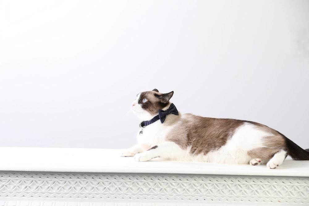 brown and white short coated medium sized dog