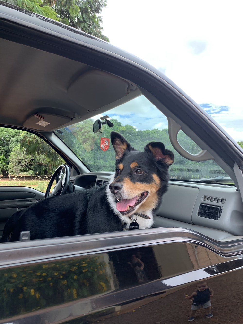 black and brown short coated dog inside car during daytime