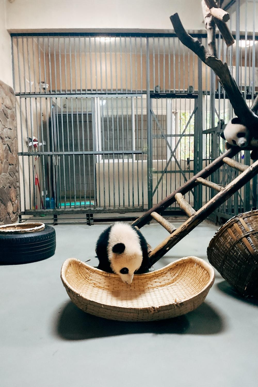 panda plush toy on brown wooden basket