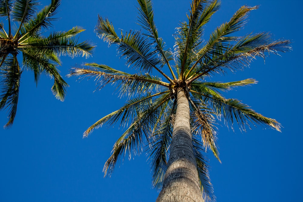 palm tree under blue sky during daytime