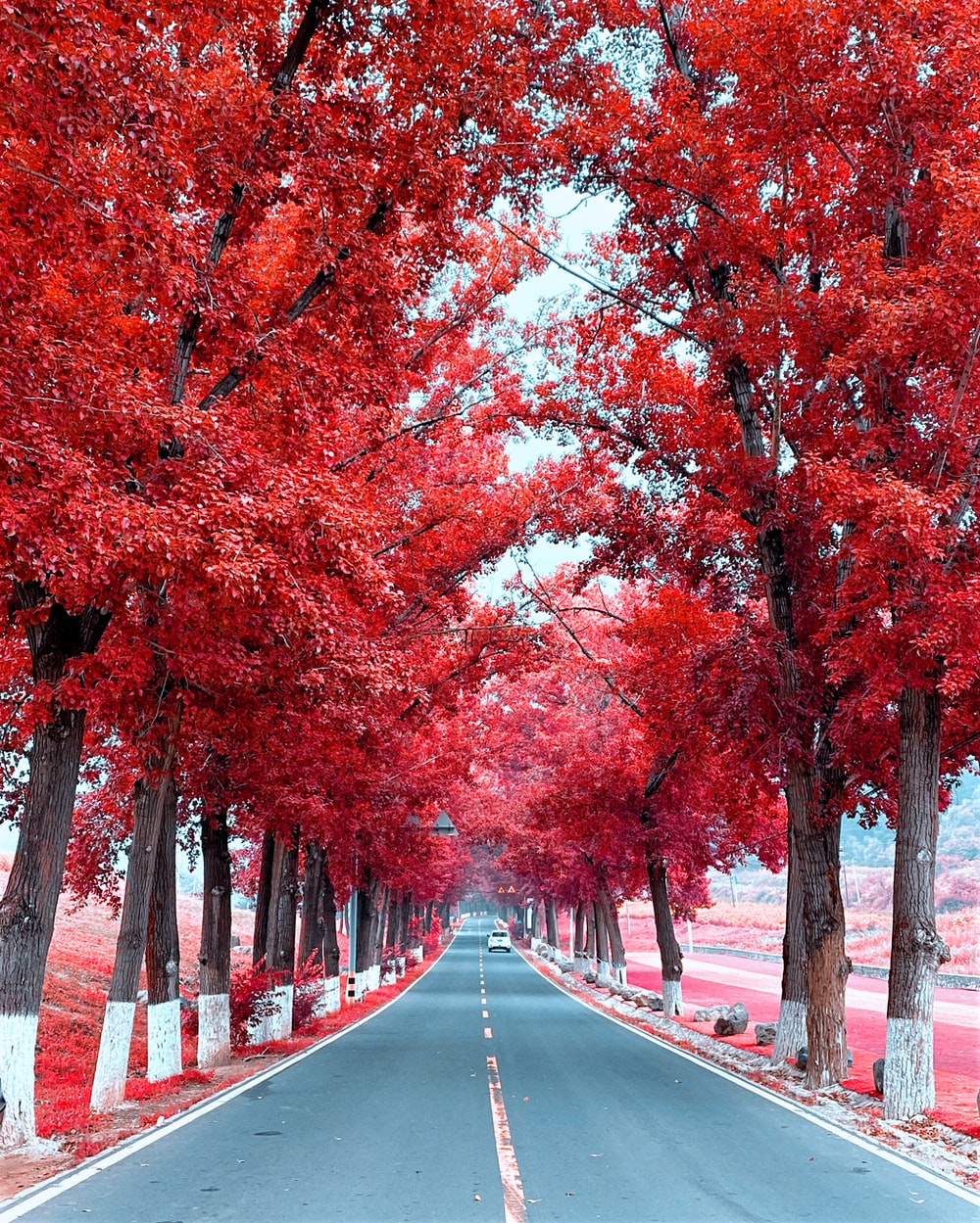 brown and orange trees on gray concrete road during daytime