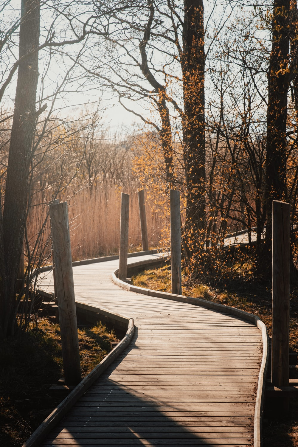 brown wooden pathway in between bare trees during daytime