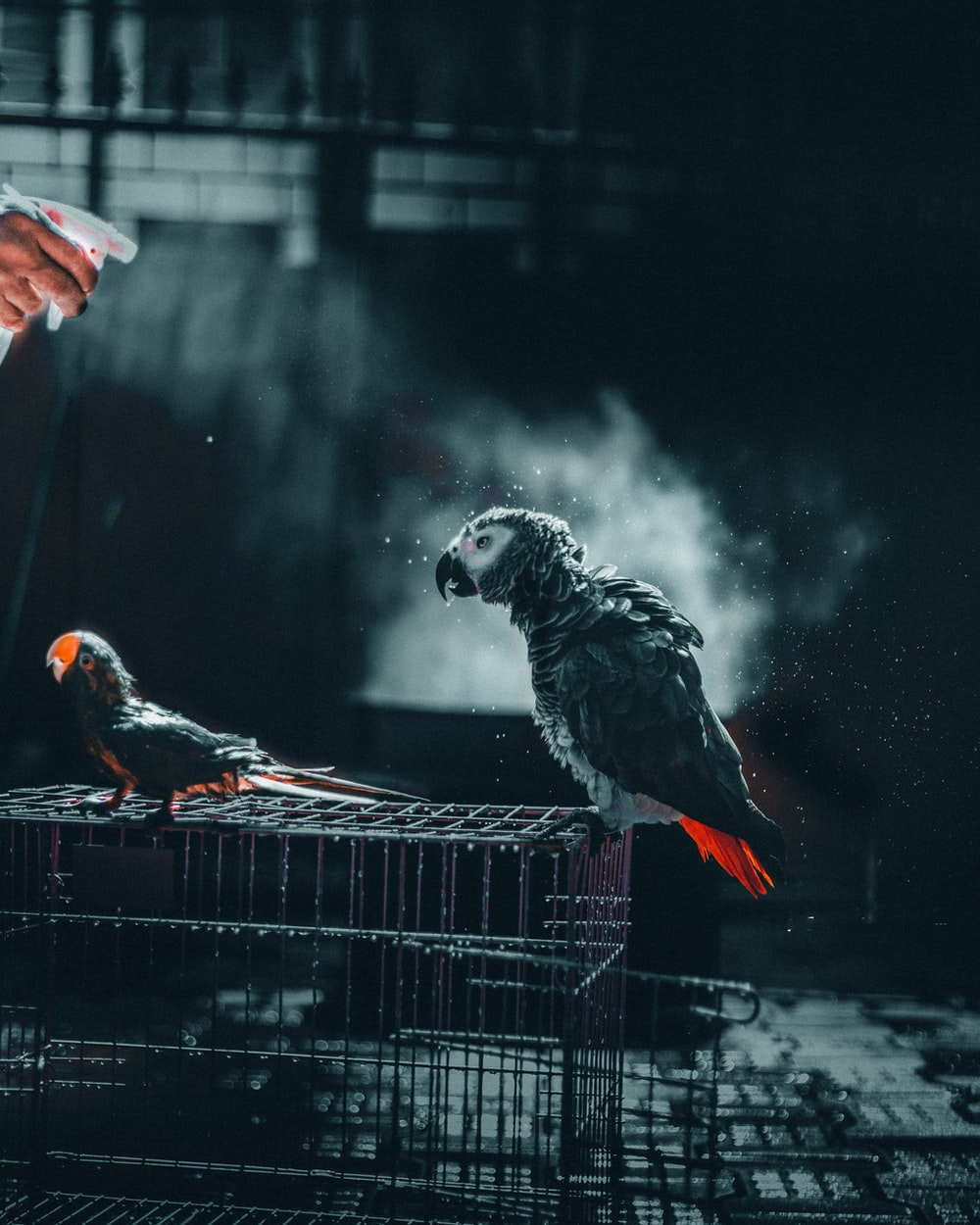 gray and white parrot on black metal cage
