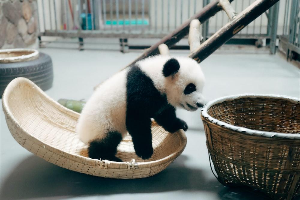 panda on brown wooden basket