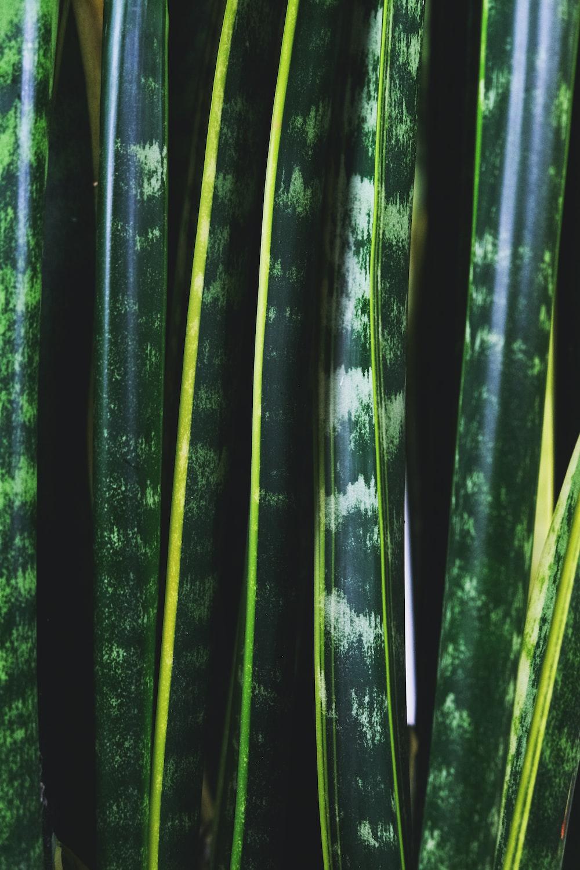 green and black plant stem