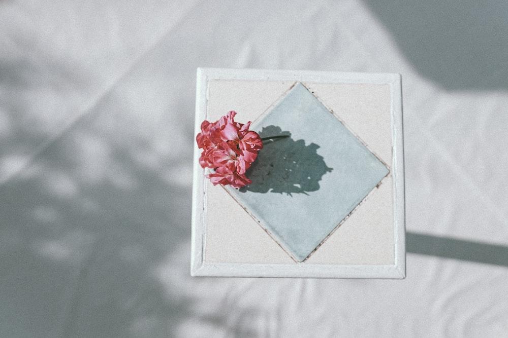 red rose on white square frame