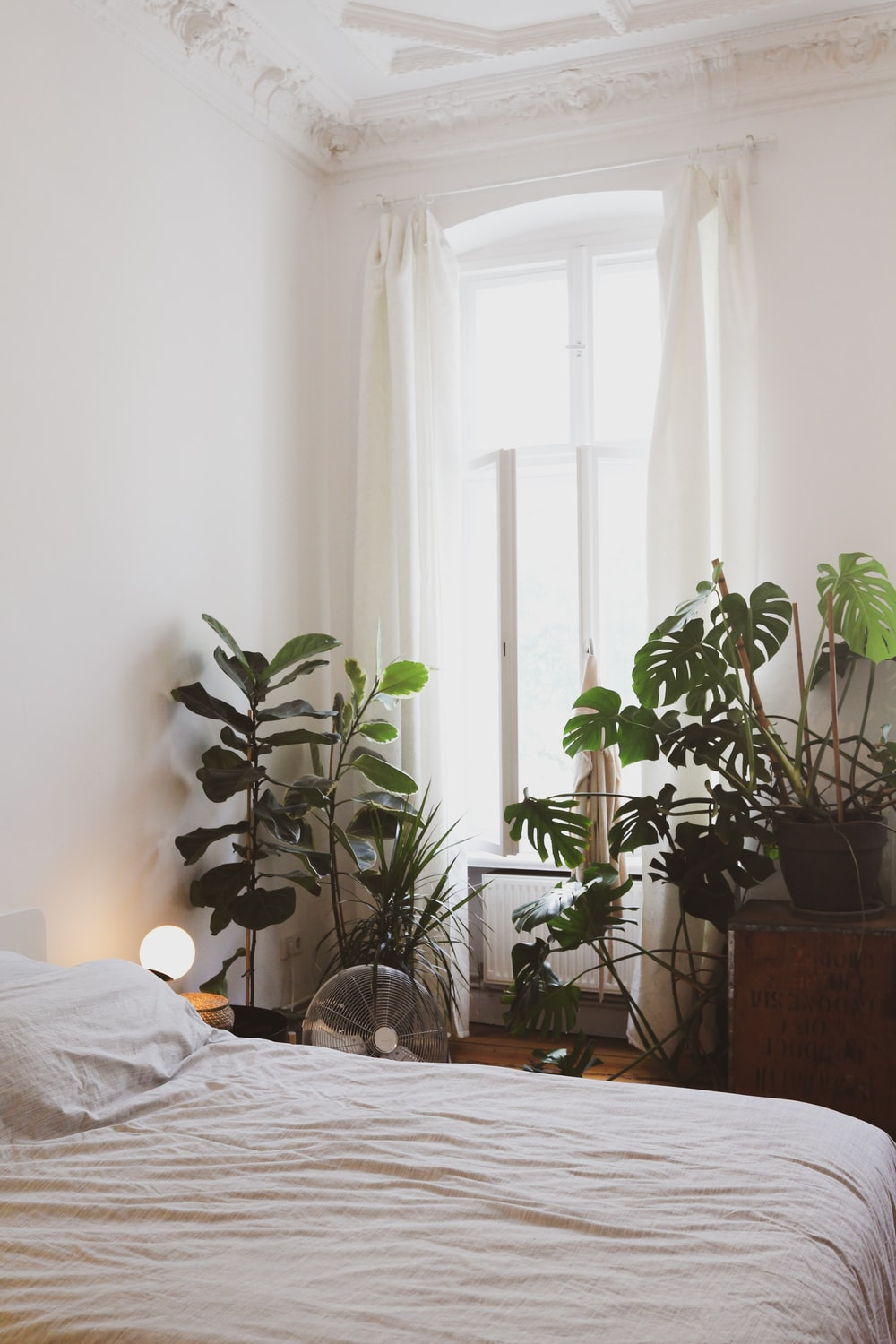 green potted plant near bed