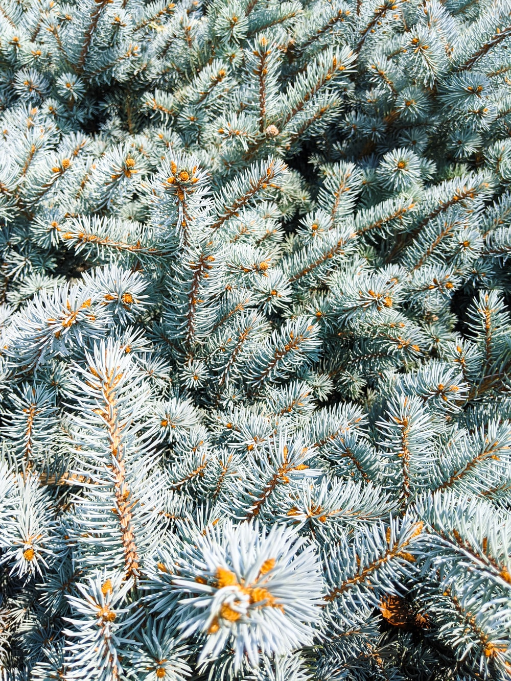 white and yellow flowers on green pine tree