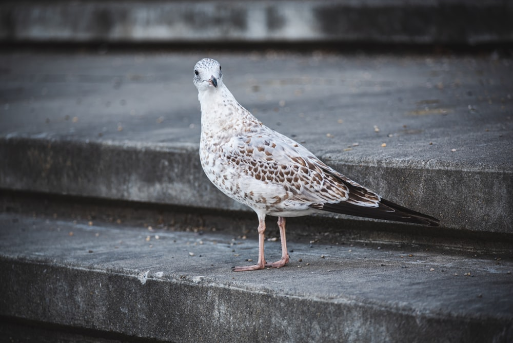white and gray bird on gray concrete stairs