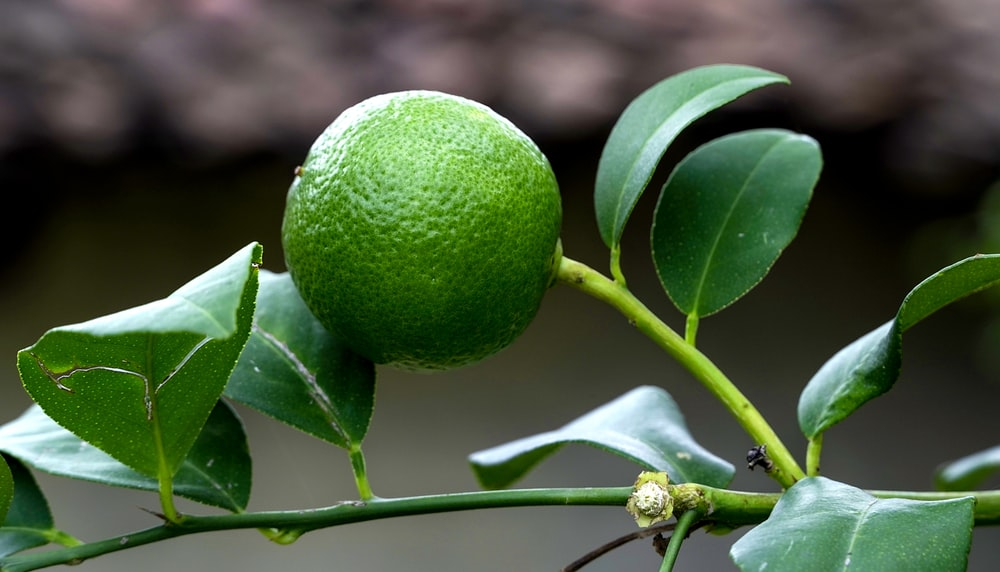 green round fruit with white flower