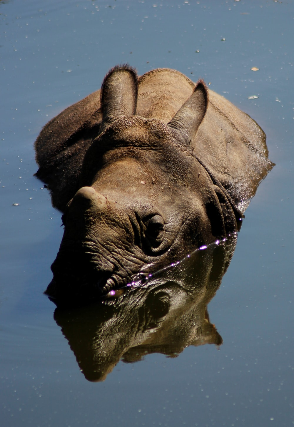 brown elephant on water during daytime