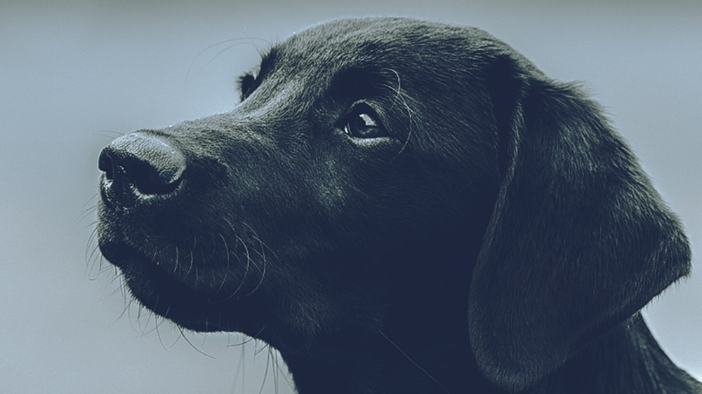black short coated dog in close up photography