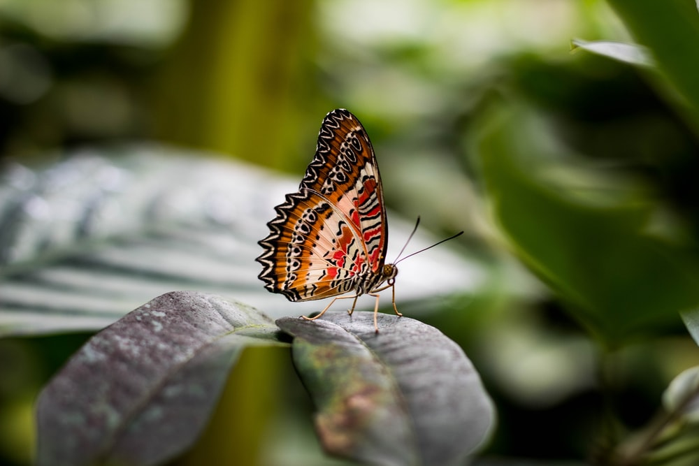 brown and white butterfly on green leaf