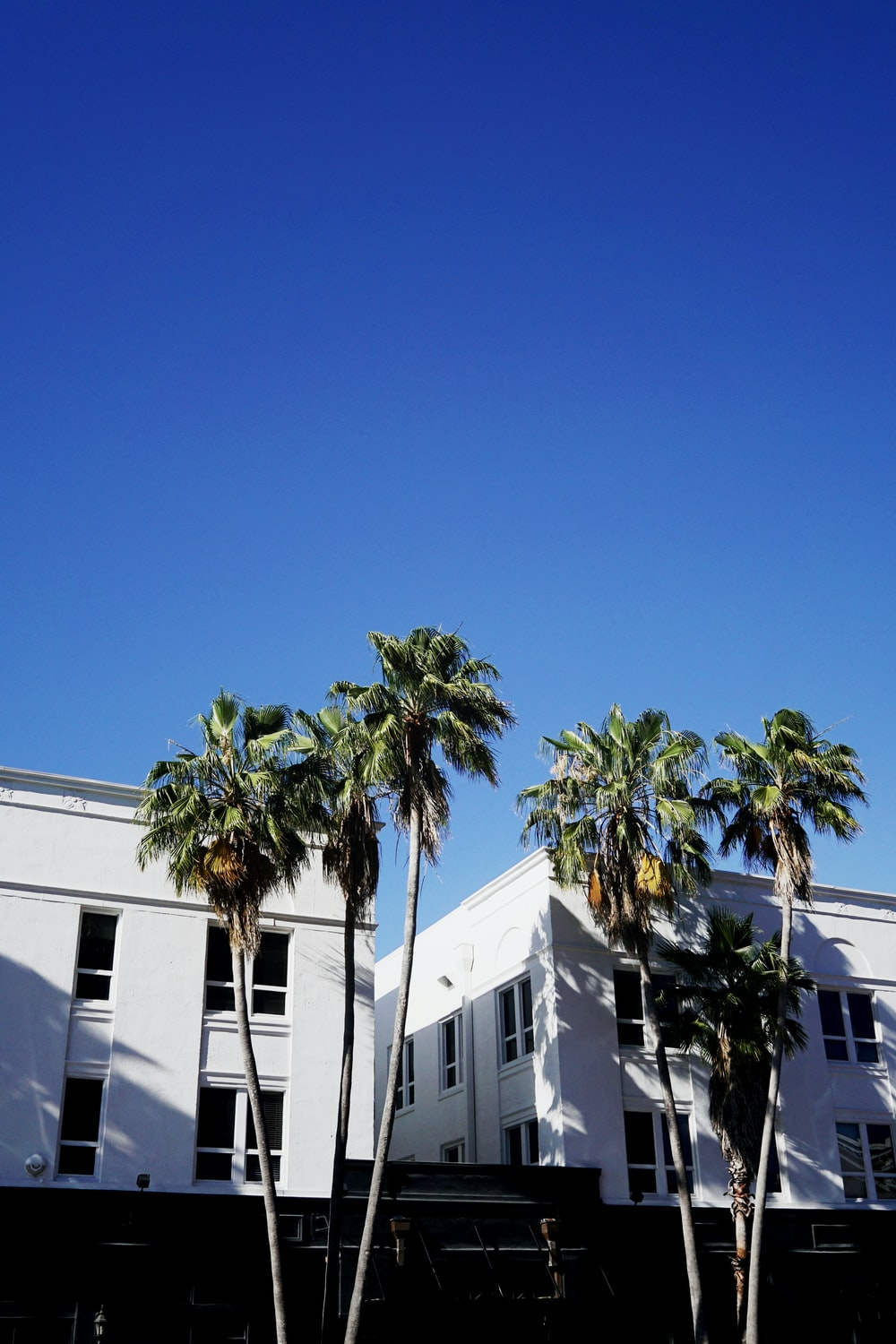green palm tree near white concrete building during daytime