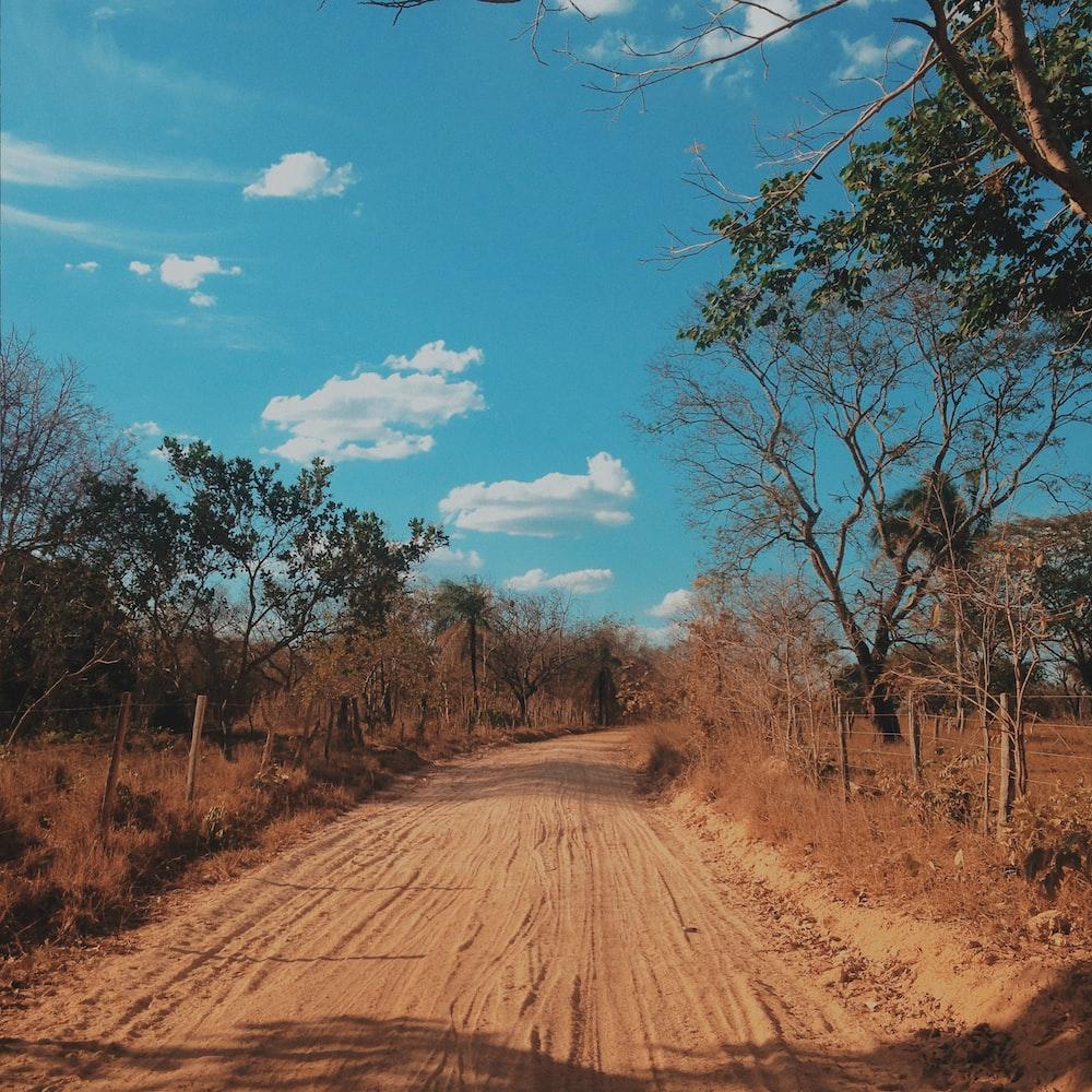 brown dirt road between trees under blue sky during daytime