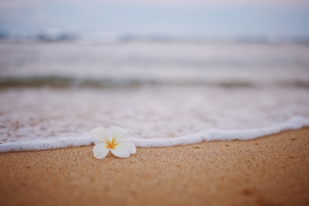 white flower on brown sand near body of water during daytime