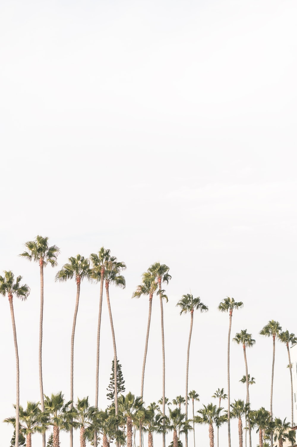 green palm trees under white sky during daytime