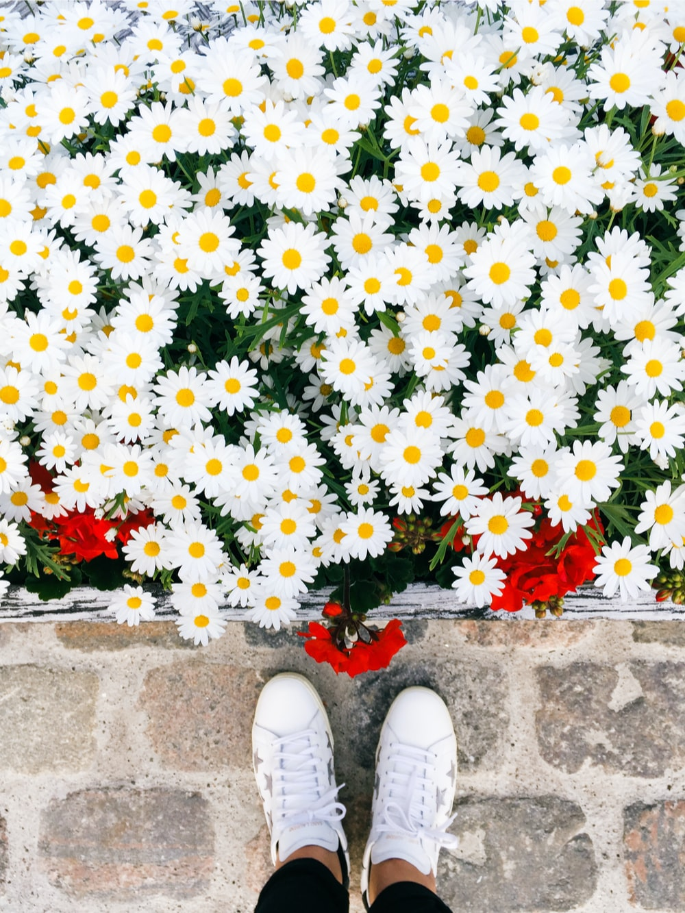 white and red flowers on brown concrete floor