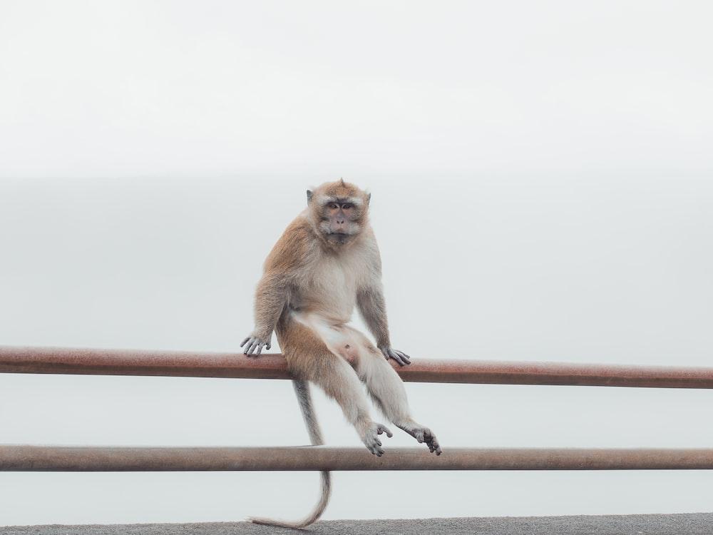 brown monkey on brown metal bar during daytime