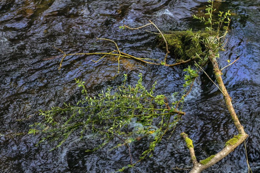 green moss on brown tree branch on water