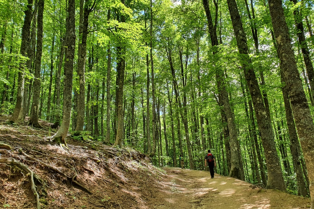 person in black jacket walking on brown dirt road in the middle of green trees during